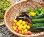 【しずく農園便り】たくさん収穫できた夏野菜BEST3!
