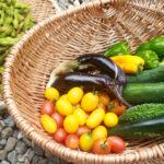 【しずく農園だより】たくさん収穫できた夏野菜BEST3!