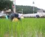 【しずく農園だより】無農薬米作りに初挑戦!
