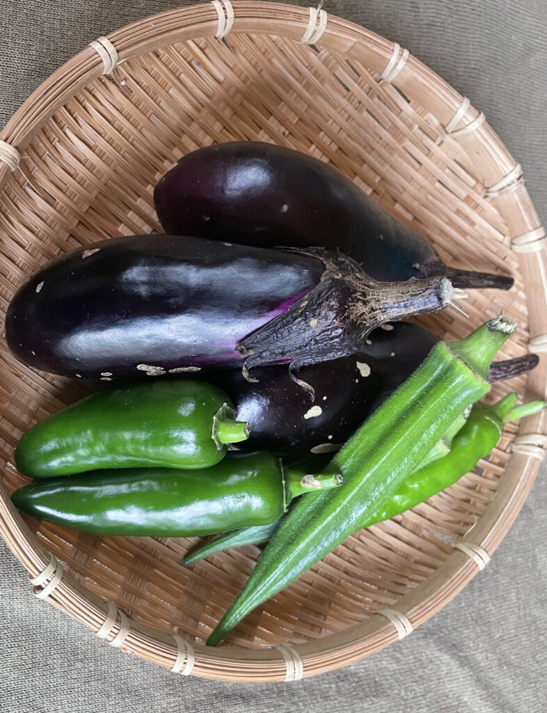 収穫した茄子とピーマンとオクラ